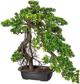 KUNSTPFLANZE Bonsai